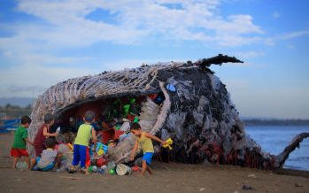 Dead whale found with 40 kilograms of plastic bags in its stomach