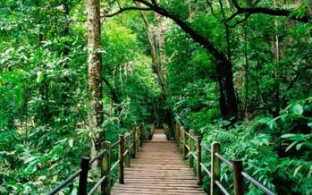4.8m hectare forest area gazetted as permanent forest reserves