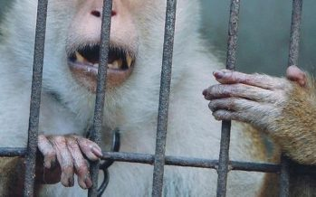 Wildlife Dept: Killing or treating animals with cruelty even when threatened an offence