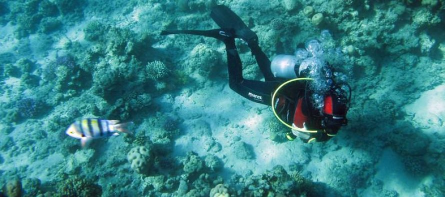 Egypt's rebounding tourism threatens Red Sea corals