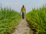 Malaysia must prioritise attaining self-sufficiency in rice production