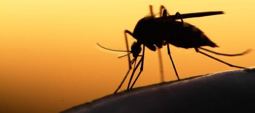 Rising dengue cases