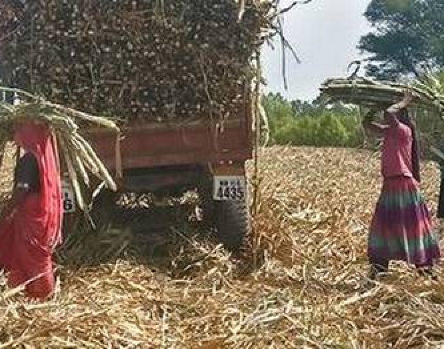 Marathwada's women go wombless due to career opportunity