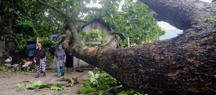 Senior couple cheat death after tree crashes through roof