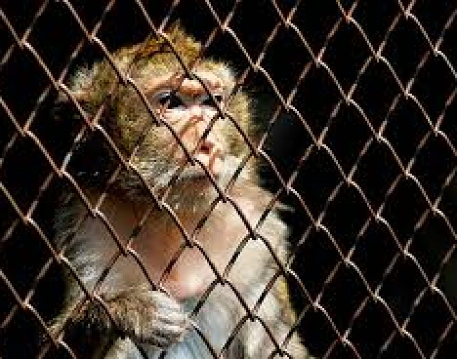 Police: Teenager claims he shot caged monkey for fun