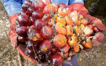 'EU would still use Malaysian palm oil'