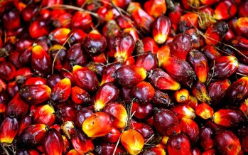 India's palm oil import hiked 18.3% last month