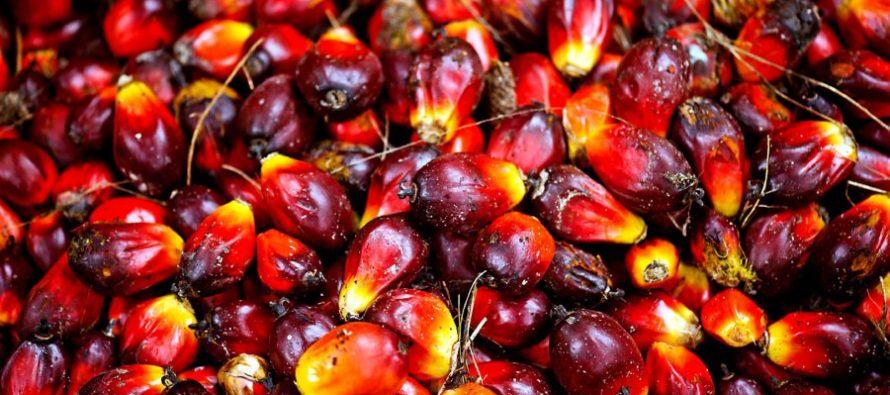Kok slams EU trade war on palm oil