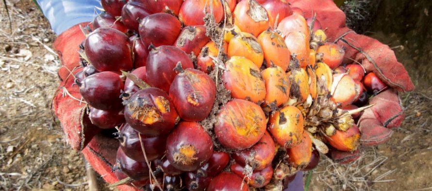 'EU would still use Malaysian palm oil'