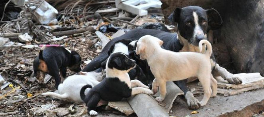 10,514 dogs vaccinated in Sarawak