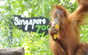 Teresa Kok takes on Singapore Zoo over sentiments against palm oil