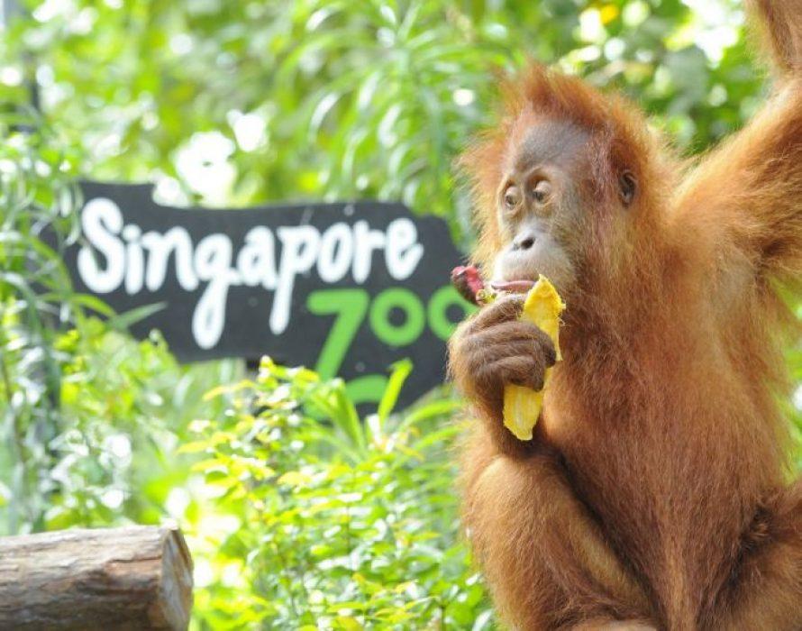 Teresa Kok takes on Singapore Zoo over sentiments against palm oil