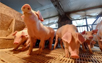 Laos confirms first outbreaks of African swine fever