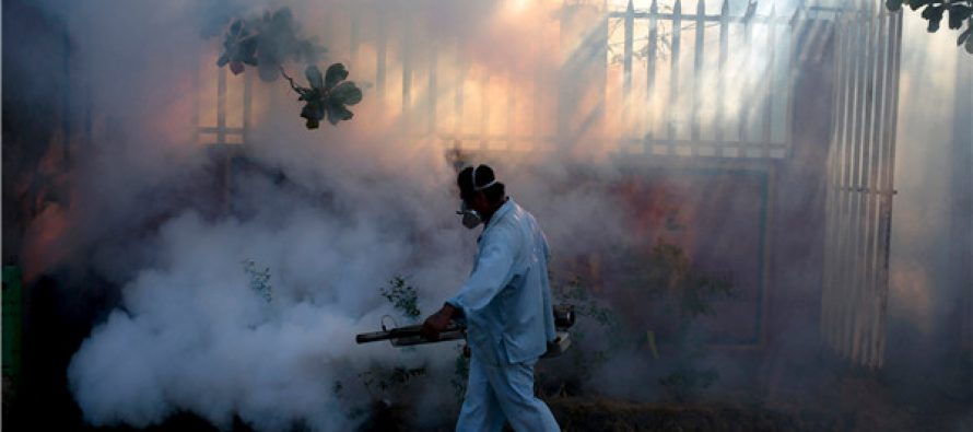 Chikungunya cases on the rise in Alor Star