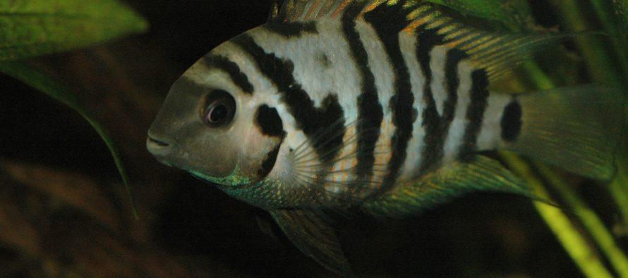 Lovelorn fish turn gloomy when separated