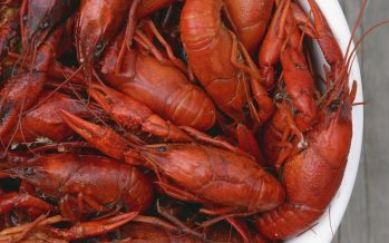 MMEA foils bid to smuggle 45,000 crawfish fry