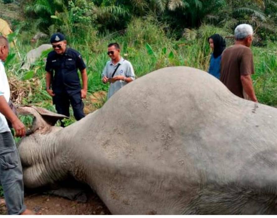 Three elephants found dead in Kluang