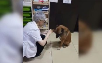 Street dog walks to pharmacy and shows injured paw. Internet in tears