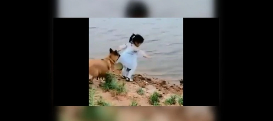 Dog saves toddler: Viral video makes Internet emotional