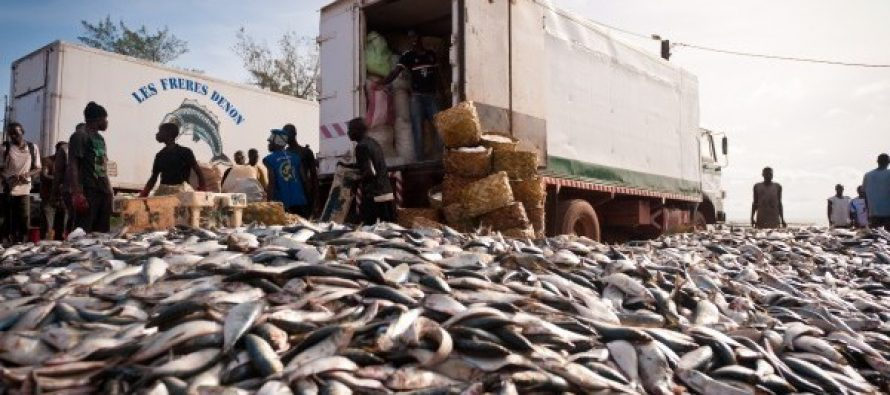 Fish oil meals a threat to millions in Africa