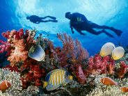 Eight Countries Unite To Save World's Coral Reefs