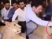 Man smashes cake in pet lion's face. Who is the real animal?