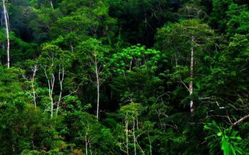 FRIM offers sustainable forestry expertise to Sarawak