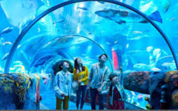 Sea Life Malaysia: Unique, new attraction to draw tourists