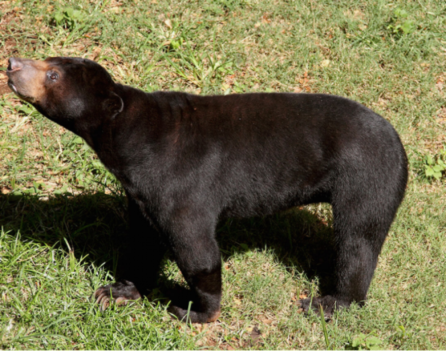 Singer arrested for keeping sun bear illegally