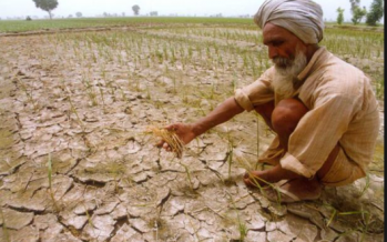 Weak monsoon cripples India's crops, economy