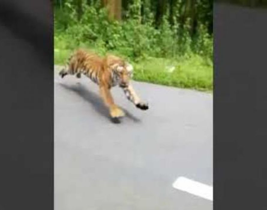 Two bikers miraculously escape a tiger attack