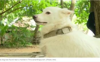 Owner dumps 3-year-old pet dog for having 'illicit relationship'