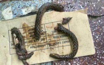 Man bites snake for revenge in India
