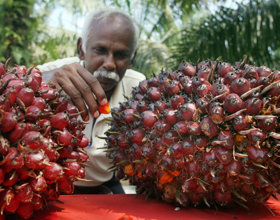 Malaysia, India's new top palm oil supplier