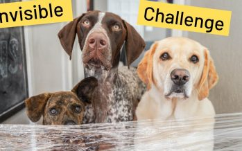 Trending: Invisible Challenge for dogs