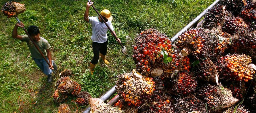Disappointed, not stifling freedom of expression over palm oil brouhaha
