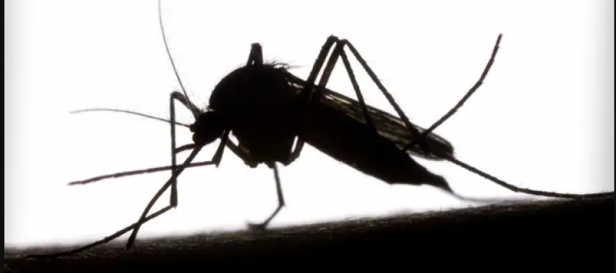 Today is World Mosquito Day 2019: History, quotes & status