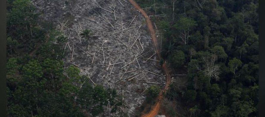Sharp rise in Brazilian deforestation undeniable