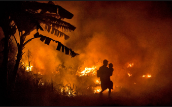 Inferno ravage 42,000 hectares of forest, plantations in Indonesia