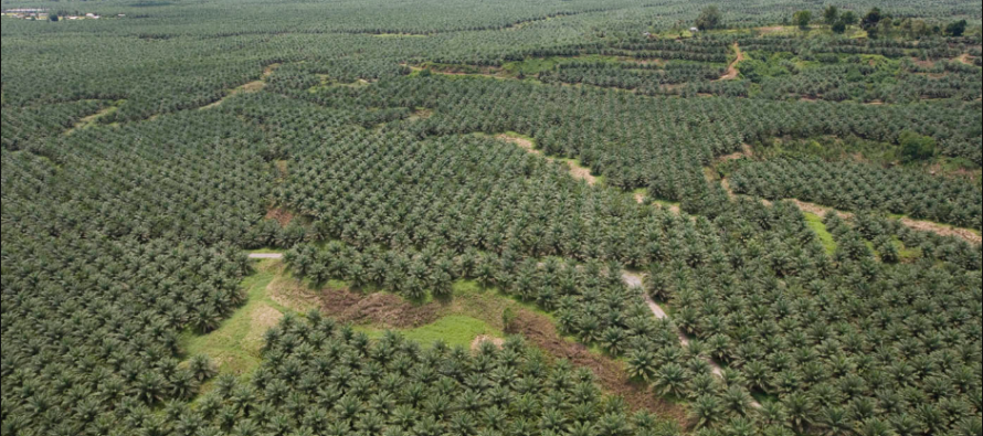Mahathir urges UK to 'break with Europe' on palm oil policy