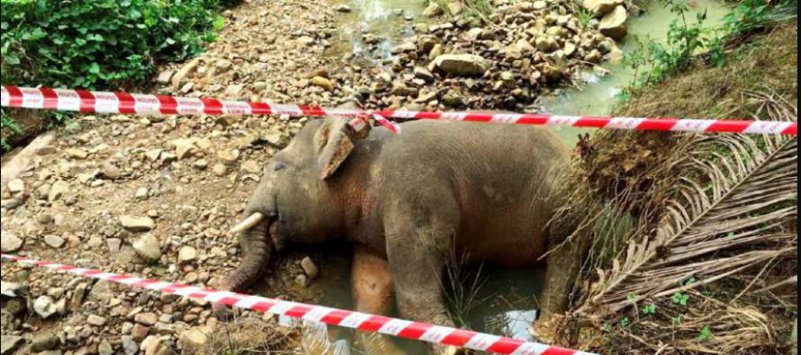 Authorities perform post-mortem on dead pygmy elephant