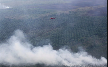Fires across Indonesia forests, sparking global warming fears