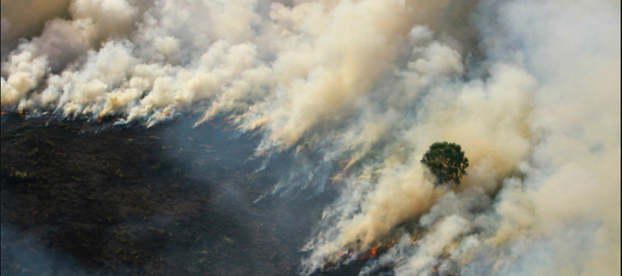 Indonesia seals off M'sian owned plantation in Riau over haze issue