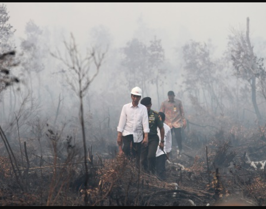 Jokowi: We're doing our best to stop forest fires