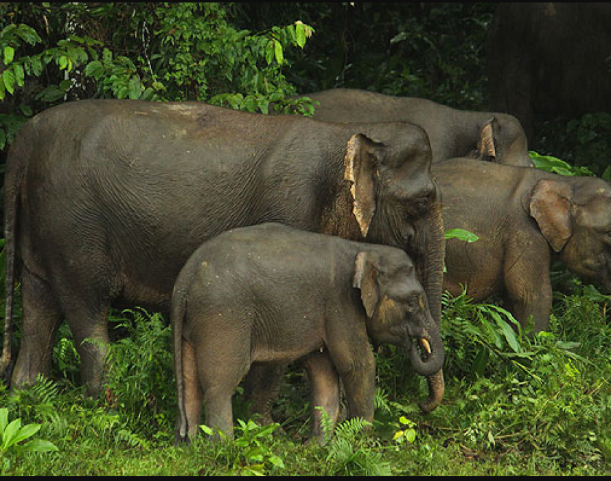 Human-elephant conflict: Local community plays crucial role in conservation