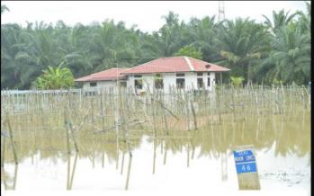 Perak floods: 270 victims in three Perak relief centres