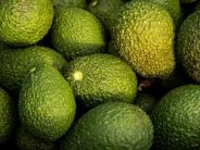 Hawaiian family wins Guinness World Records title for biggest avocado weighing 2.5 kgs