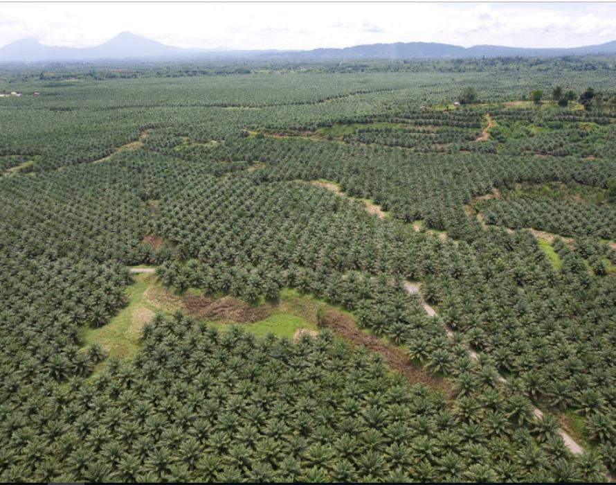 Fine for oil palm estates above 40.5 ha without MSPO cert
