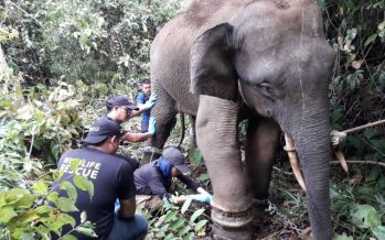 Ministry views brutal killing of pygmy elephant seriously