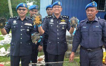 Marine police seize 624 exotic animals worth RM241,840 in Pasir Puteh